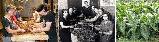 consorzio-tabacchicoltori-montegrappa